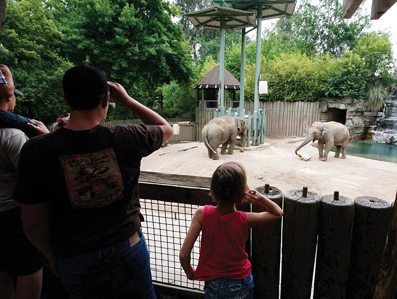 Visitors watch elephan...