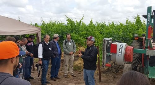 New Vineyard technologies offer improvements in wine grape yield and quality article thumbnail mt-3