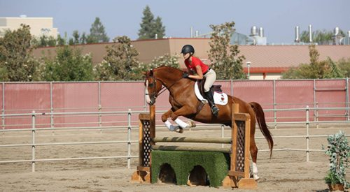 Bulldog reins in her place at the Student Horse Center article thumbnail mt-3