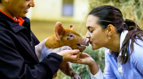 They kissed a pig and became Fresno State's newest club – Block and Bridle article thumbnail mt-3