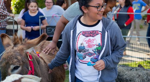 Stressed over exams? These students relaxed with animals at mini-zoo article thumbnail mt-3