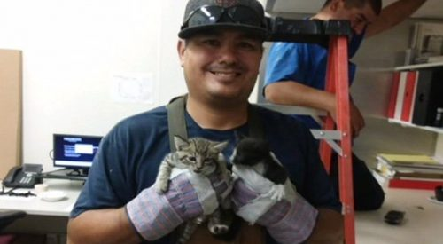 It took a can of tuna to get these kitties down from an office ceiling article thumbnail mt-3