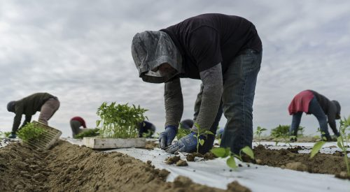 Fresno State students receive internship to help farmworkers article thumbnail mt-3