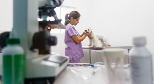 Which Careers Allow You to Work with Animals? article thumbnail mt-3