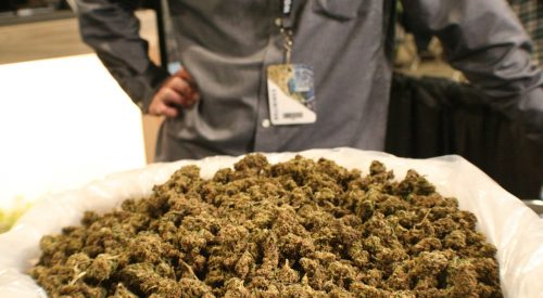 Hemp growing pavilion popular draw at Ag Expo article thumbnail mt-3